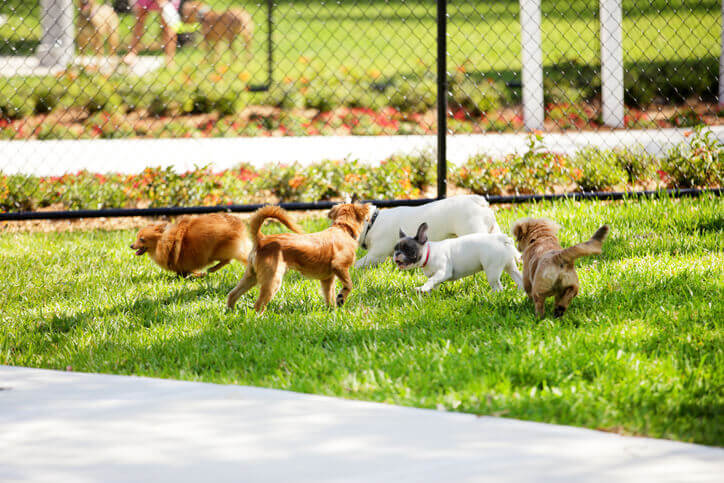 commercial dog park installation services willow grove pa