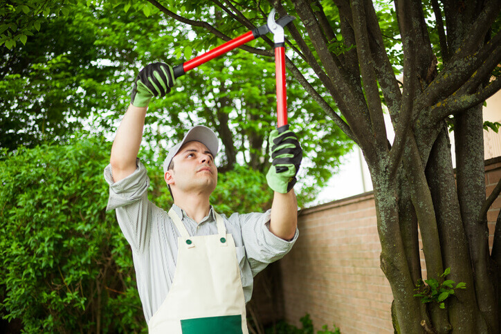 commercial arborist tree care services willow grove pa